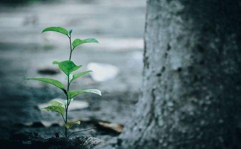 reducing rainforest deforestation