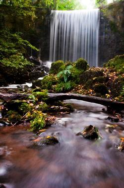 rainforest water
